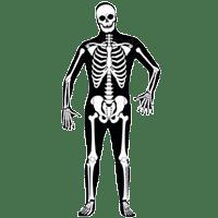 Скелеты